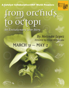 orchidstooctopi
